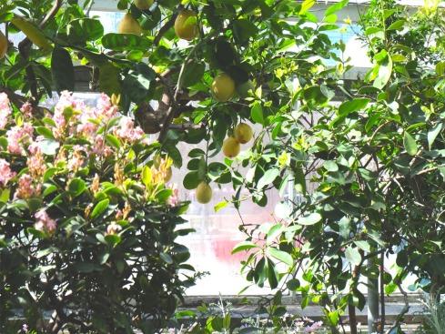 allen-gardens25