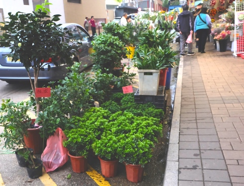 flower-market-green