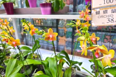 flower-market-orchid