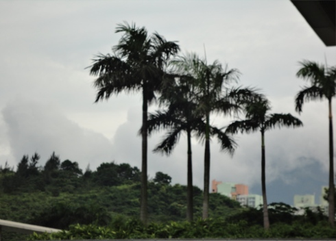 palm-trees-hong-kong