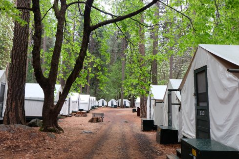 camp-curry-cabins