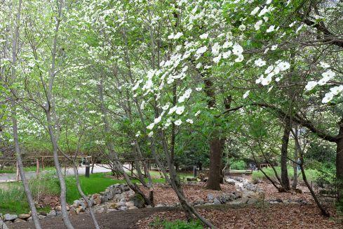 camp-curry-dogwood-trees
