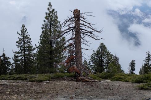 lone-pine-glacier-point