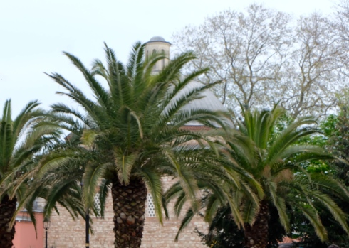 palm-trees-istanbul