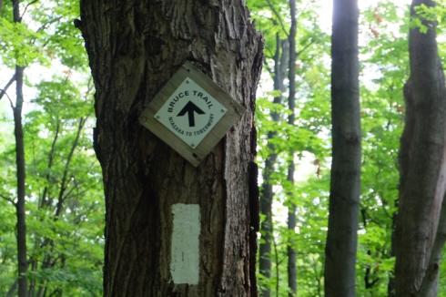 bruce-trail-1