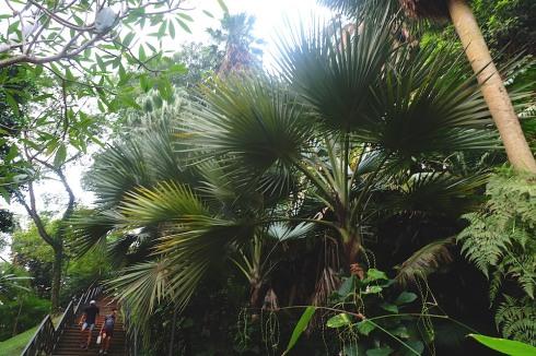 foliage-singapore