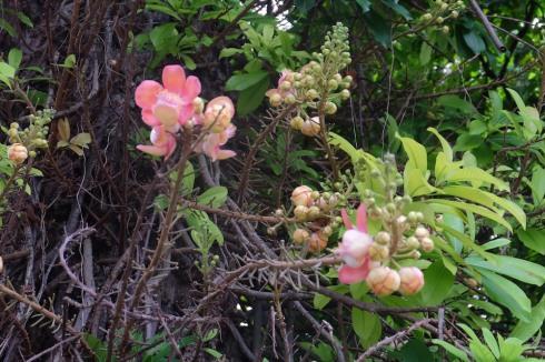 singapore-tree