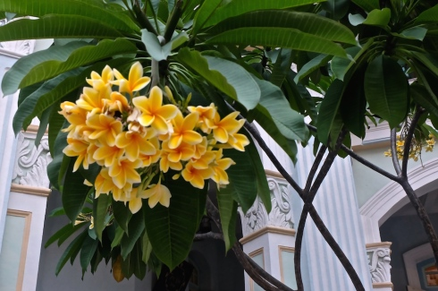 singapore-flowers
