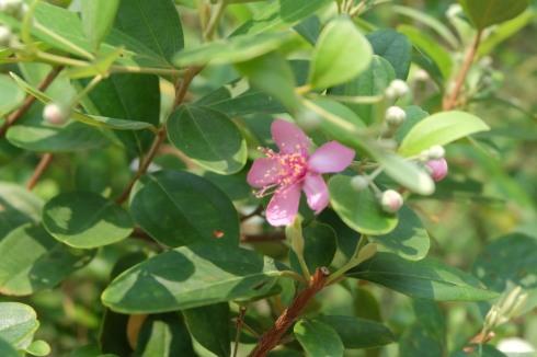 singapore-garden-flower
