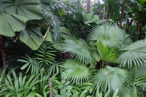 singapore-green-garden